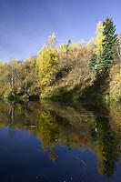 Fall morning at a beaver pond