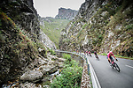 The peloton during Stage 17 of La Vuelta d'Espana 2021, running 185.8km from Unquera to Lagos de Covadonga, Spain. 1st September 2021.     <br /> Picture: Unipublic/Charly Lopez   Cyclefile<br /> <br /> All photos usage must carry mandatory copyright credit (© Cyclefile   Charly Lopez/Unipublic)
