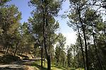 Biria forest scenic route