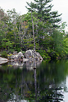 Dead tree trunk reflected in Heron pond, Wampatuck State Park, Massachusetts, vertical.