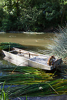 Traditional punts are used to harvest the rushes along the river