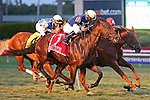 HALLANDALE BEACH, FL - FEBRUARY 06:     Lukes Alley #1 with Paco Lopez on board wins the 34th running of the Gulfstream Park Turf Handicap G1 on Donn Handicap Day  at Gulfstream Park on February 06, 2016 in Hallandale Beach, Florida. (Photo by Liz Lamont)