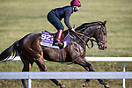 Ubettabelieveit, trained by Nigel Tinkler, exercises in preparation for the Breeders' Cup Juvenile Turf Sprint at Keeneland 11.03.20.