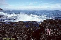 AC01-036z  Ocean - waves breaking, beach with starfish on rocks