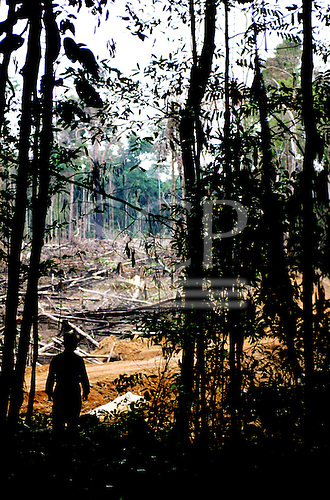 Juruena, Mato Grosso State, Brazil. Guy Reinaud looking over a scene of devastated forest along an illegal logging road.