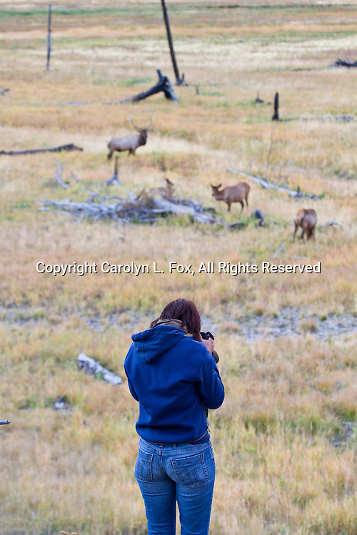 A female photographer takes pictures in Yellowstone National Park..