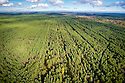 Irradiated Scots Pine (Pinus sylvestris) plantation west of the Chernobyl Nuclear Power Plant. These dense stands of contaminated trees present a constant threat of fire - if they were to burn radioactive material would be released into the atmosphere. This image was shot from a Ukrainian government helicopter during a survey of the Chernobyl Exclusion Zone in October, 2012.
