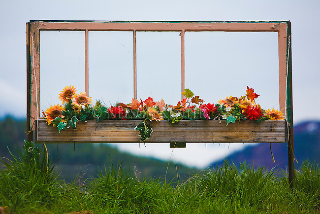 A window box with flowers but no house.