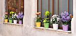 Potted Flowers 02 - Beyoglu, Istanbul, Turkey.