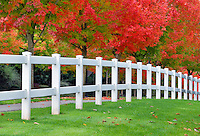 Tree lined drive with fall color and fence. Tualatin, Oregon