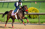 LOUISVILLE, KY - MAY 02: Mokat exercises and prepares during morning workouts for the Kentucky Derby and Kentucky Oaks at Churchill Downs on May 2, 2016 in Louisville, Kentucky. (photo by Scott Serio/Eclipse Sportswire/Getty Images)
