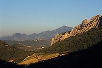 Europe/France/Provence-Alpes-Côte d'Azur/84/Vaucluse/Gigondas: [Les Dentelles de Montmirail et] le vignoble de Gigondas (AOC Côtes-du-Rhône-Village) - En fond le sommet du Mont Ventoux (1909 mètres)