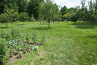 Fruit orchard and vegetable garden