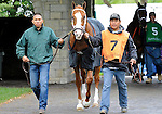 Stratford Hill (no. 7), ridden by John Velazquez and trained by Todd Pletcher, wins the 15th running of the grade 3 Shakertown Stakes for three year olds and upward on April 16, 2011 at Keeneland in Lexington, Kentucky.  (Bob Mayberger/Eclipse Sportswire)