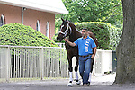 MateriJune 4, 2015: Belmont Stakes contender Materiality, trained by Todd Pletcher, is led to the paddock for a schooling session, Belmont Park, Elmont, NY. Joan Fairman Kanes/ESW/CSM