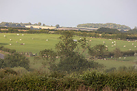 22.7.2020 Farming landscape  in Rutland  ©Tim Scrivener Photographer 07850 303986<br />      ....Covering Agriculture In The UK.