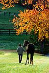 SPRINGDALE HORSE FARM BENTON PA