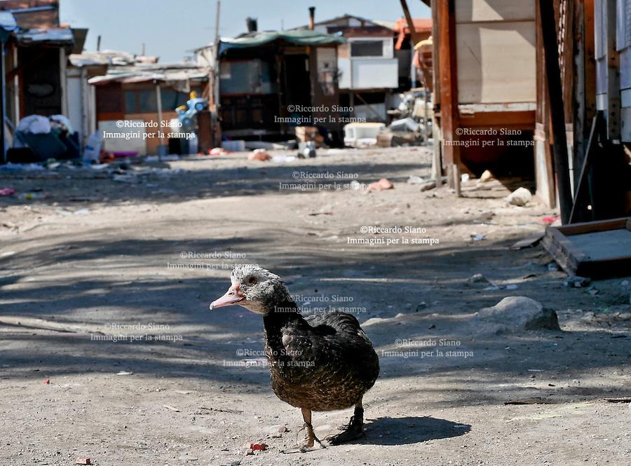 - NAPOLI 1 MAR  2014 -  Scontro Municipalità-Comume sul campo Rom da abbattere al via del Pianto. gli animali  rimasti nel campo