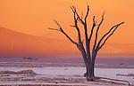 Dead acacia tree in front of red sand dune, Dead Vlei, Namib-Naukluft National Park, Namib Desert, Namibia