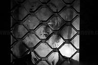 10.07.2020 - Assange Libero, Walkabout For Julian Assange With Projection of Miltos Manetas Artworks