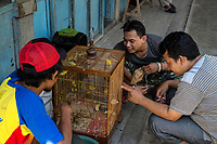 Yogyakarta, Java, Indonesia.  Young Men Inspecting Birds before Making a Purchase in the Bird Market.