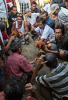 Bali, Indonesia.  Cock Fighting in an Indonesian Village.  Owners goad their birds while waiting for the next match.