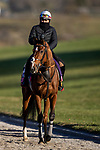 November 3, 2020: Nazuna, trained by trainer Roger Varian, exercises in preparation for the Breeders' Cup Juvenile Fillies Turf at  Keeneland Racetrack in Lexington, Kentucky on November 3, 2020. Alex Evers/Eclipse Sportswire/Breeders Cup