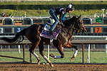 ARCADIA, CA  OCTOBER 30:  Breeders' Cup Juvenile Fillies entrant Donna Veloce, trained by Simon Callaghan,  exercises in preparation for the Breeders' Cup World Championships at Santa Anita Park in Arcadia, California on October 30, 2019. (Photo by Casey Phillips/Eclipse Sportswire/CSM)