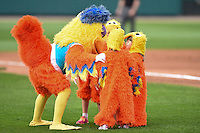 The Famous San Diego Chicken on field entertainment during a game between the Indianapolis Indians and Rochester Red Wings on July 26, 2014 at Frontier Field in Rochester, New  York.  Rochester defeated Indianapolis 1-0.  (Mike Janes/Four Seam Images)
