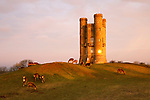 United Kingdom, England, Worcestershire, Broadway: Broadway Tower with Deer at sunrise | Grossbritannien, England, Worcestershire, Broadway: Hirsche am Broadway Tower bei Sonnenuntergang