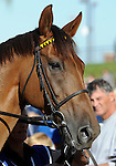 09 September 20: Quijano prior to the grade 1 Northern Dancer Turf Stakes for three year olds and upward at Woodbine Racetrack in Rexdale, Ontario.