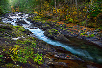 Upper Sol Duc River.  Olympic Peninsula, Washington.  Sept.
