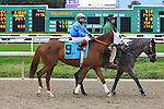 January 16, 2016: Hot Zapper with Jose Riquelme up in the Col. E.R. Bradley Handicap race at the Fairgrounds race course in New Orleans Louisiana. Steve Dalmado/ESW/CSM