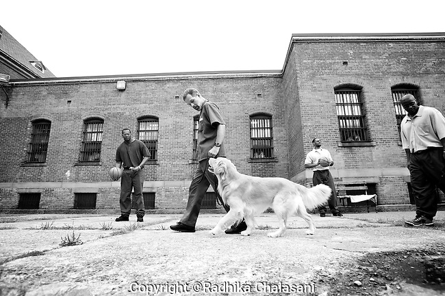 BEACON, NEW YORK:  Ed (R) walks Midas around the courtyard to teach him not to respond to distractions as balls are thrown around during a training class for the Puppies Behind Bars (PPB) program at Fishkill Correctional Facility. The  program prepares puppies to be service dogs and consists of one day of class a week for obedience training, grooming, basic care of the dogs. The dogs spend 18-20 months in the program working with the prisoners.