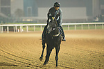 DUBAI,UNITED ARAB EMIRATES-MARCH 30: Music Magnate,trained by Bjom Baker,exercises in preparation for the Al Quoz Sprint at Meydan Racecourse on March 30,2018 in Dubai,United Arab Emirates (Photo by Kaz Ishida/Eclipse Sportswire/Getty Images)