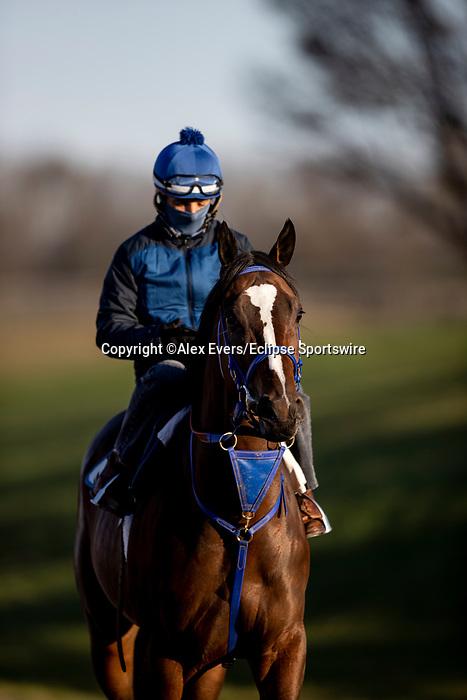 November 3, 2020:  Signalman at Keeneland Racetrack in Lexington, Kentucky on November 3, 2020. Alex Evers/Eclipse Sportswire/Breeders Cup