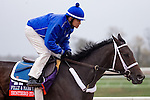 October 28, 2015:  Sentiero Italia, trained by Kiaran P. McLaughlin and owned by Godolphin Racing LLC, exercises in preparation for the Breeders' Cup Filly & Mare Turf at Keeneland Race Track in Lexington, Kentucky on October 28, 2015. Jon Durr/ESW/CSM