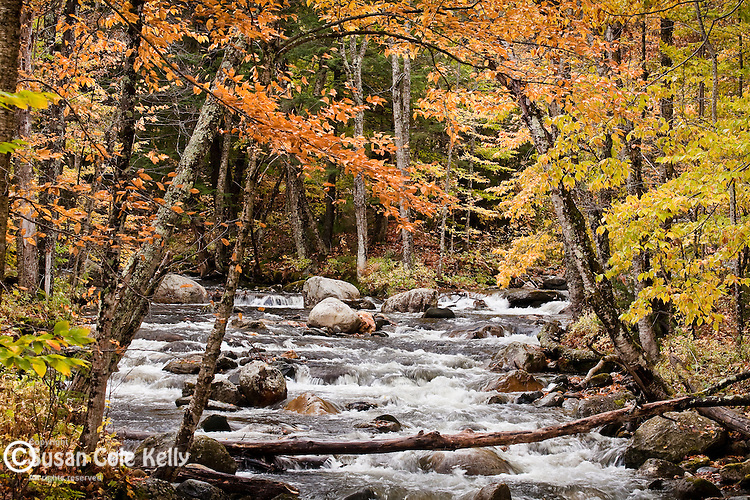Fall foliage  and a stream in the Green Mountain National Forest, VT, USA