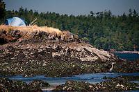 Tent Camping at Horton's Hook, Shaw Island, Washington, US