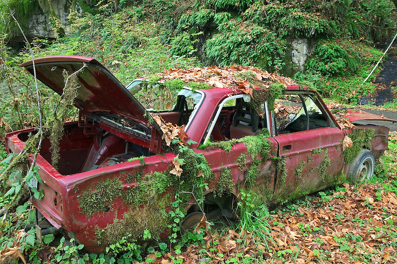 Old Volvo with moss in Siuslaw National Forest, near the Oregon coast Oregon