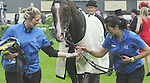 Well Sharp (no. 2), ridden by F.M. Berry and trained by Jonjo O'Neill, wins the Ascot Stakes for four year olds and upward on June 18, 2013 at Ascot Racecourse in Ascot, Berkshire, United Kingdom.  (Bob Mayberger/Eclipse Sportswire)