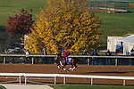November 3, 2020: Arklow, trained by trainer Brad Cox, exercises in preparation for the Breeders' Cup Turf at Keeneland Racetrack in Lexington, Kentucky on November 3, 2020. John Voorhees/Eclipse Sportswire/Breeders Cup/CSM