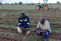 ZAMBIA, Mazabuka, Chikankata area, medium scale farmer Stephen Chinyama, he practise conservation farming, ripped furrows for cotton seeding, in talk with Conservation farmer Unit CFU Steven Nshimbi