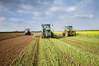 Flailing, incorporating and ploughing in biofumigant cover crop to reduce PCN prior to cropping potatoes - September, Lincolnshire