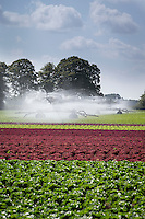 Two booms irrigating lettuce - Augsut; South Lincolnshire