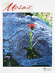 Indian Paintbrush flower growing through hole in dead log used on NFF cover