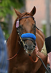 25 July 2009: Sidney's Candy (2yo by Candy Ride) at Del Mar Race Track, Del Mar, CA