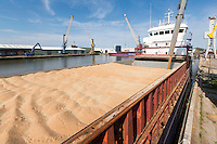Feed wheat being loaded for export at Port of Boston - Lincolnshire - June