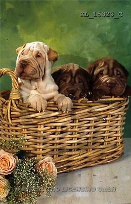 Interlitho, ANIMALS, dogs, photos(KL15329/C,#A#) Hunde, perros