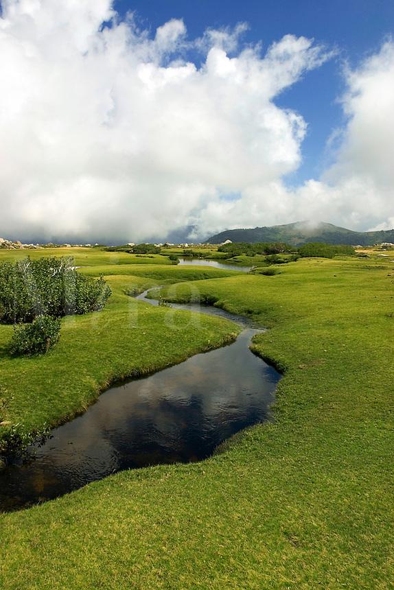Corsica. Pozzis, peat bog, near the Col de Verde. Fium'Orbo. France..